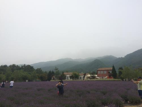 Hani Lavender Farm