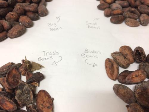 Sorting Vietnamese Cacao for Home Chocolate Making