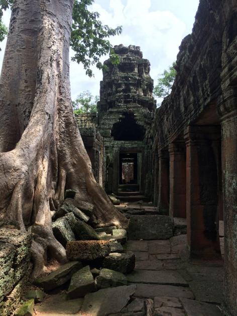 Angkor Wat Cambodia Siem Reap Path