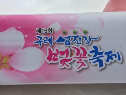 Cherry Blossom festival in Korea