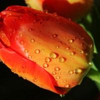 Riega la flor