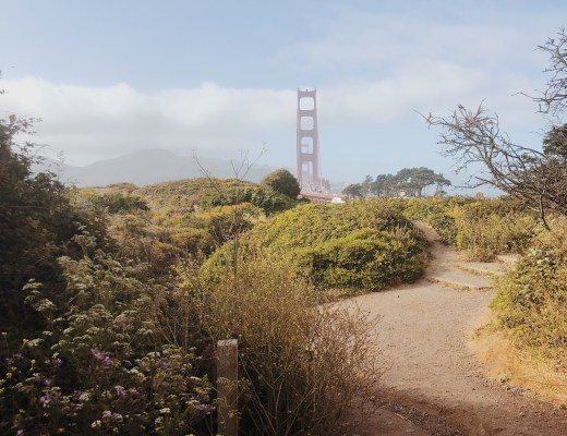Solo In San Francisco: What To Do In SF On Your Own