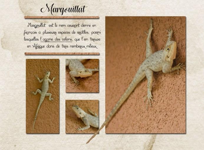 margouillat