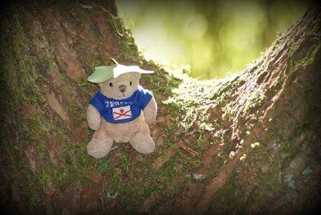 Teddy 33/52 2013
