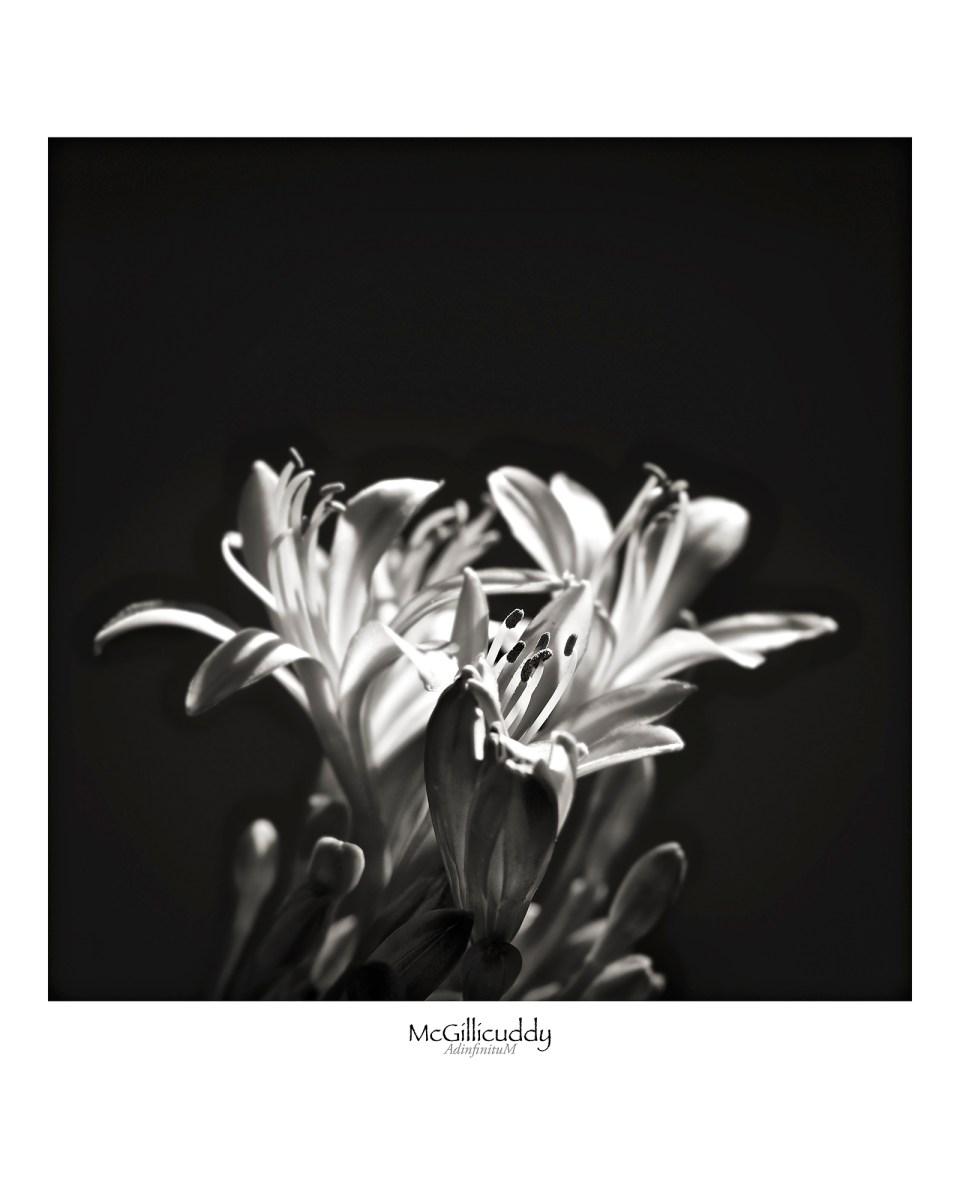 flower-power-test-1-bright