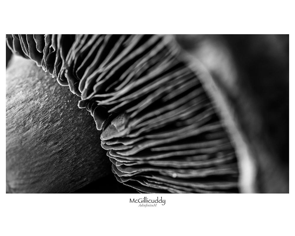 strange-fungus-1-web