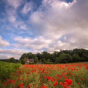 poppies Landscape Photography
