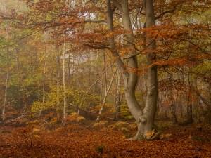 Burnham Beeches Autumn Landscape Photography