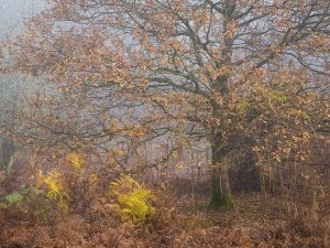 Chiltern Woodland Landscape Photography