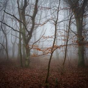 Chiltern Woodland Landscape Photography