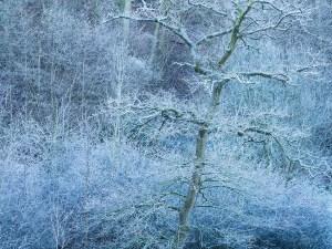 Sydlings Copse frost Landscape Photography