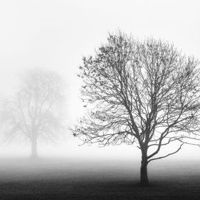 misty trees Landscape Photography