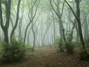 Landscape Photography of misty Chiltern hills woodland.