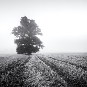 Landscape Photography of a tree in mist.