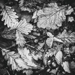 Landscape Photography of autumn carpet