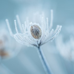 Landscape Photography of frozen seed head