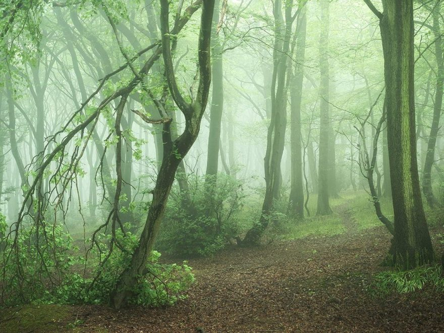 Landscape Photography of misty Chiltern Woodland