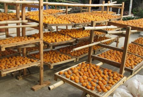 Dried Apricot Farming