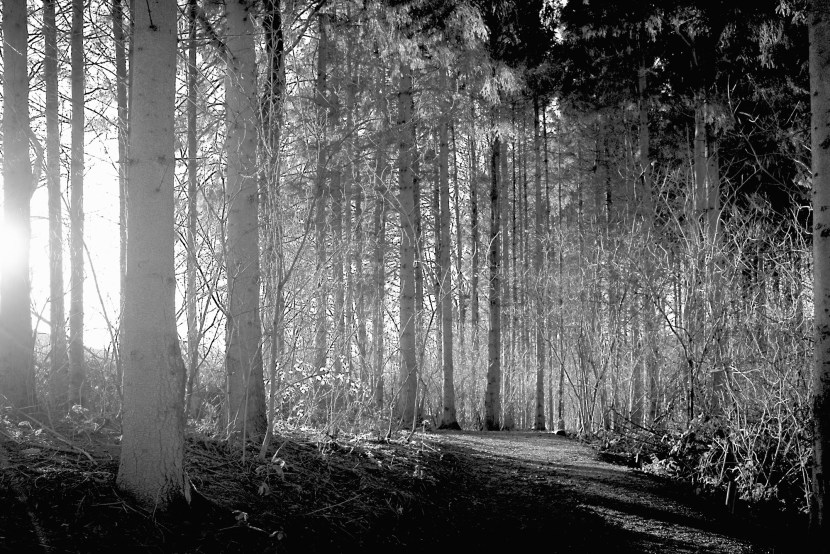 The afternoon winter sun shinning through the wood