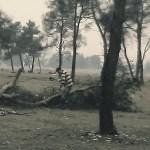 Nastavljeno divljanje šumokradica: Posječeno još 30 stabala na Ćemovskom