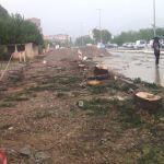 Problematični trendovi urbanog zelenila