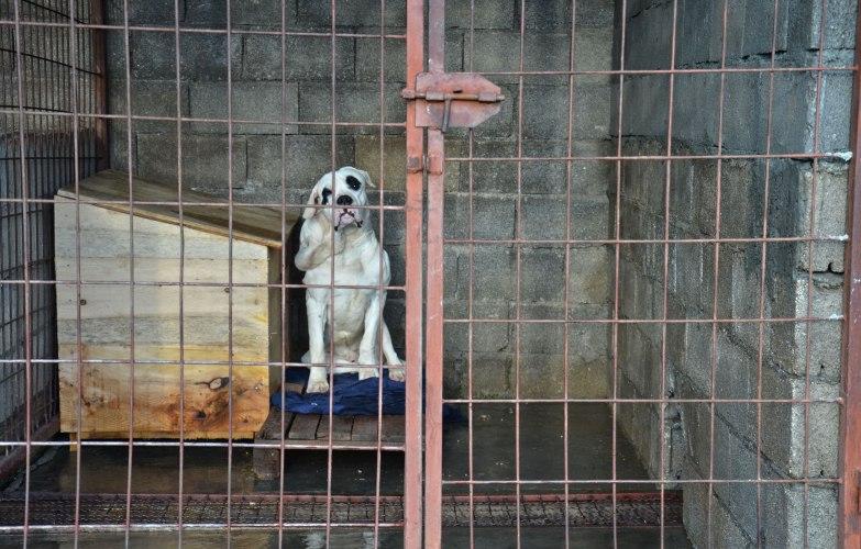 Migo obećao, Vojvodić porekao: Ko donosi odluke o ubijanju pasa?