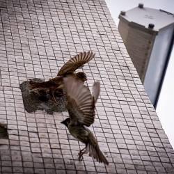 Šta uraditi sa ptićem koji je ispao iz gnijezda