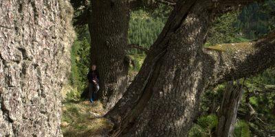 Zeletin, priča o prirodi i ljudima