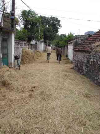 A hay-covered back street of Ninh Binh