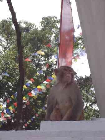 One of the many guardians of Swayambhunath