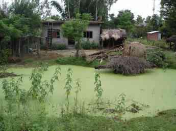 Nice pond