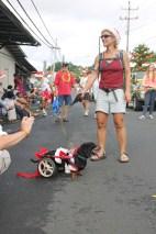 2013 Pahoa Parade 336