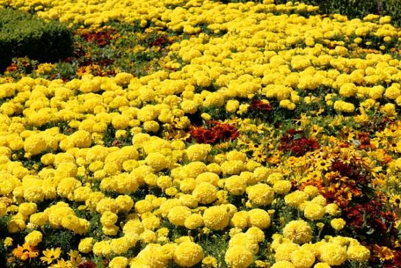 Vibrant Flowers at Dunedin Railway Station