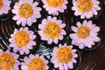 echinacea_cupcakes_damschen