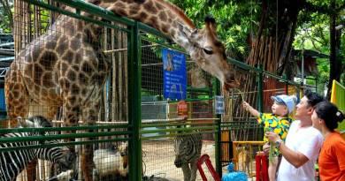 hươu cao cổ vườn thú đầm sen