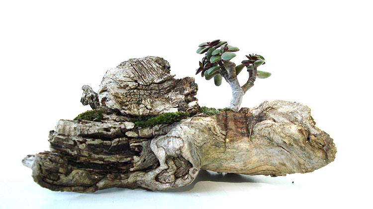 Дървото на живота във вашия дом 4