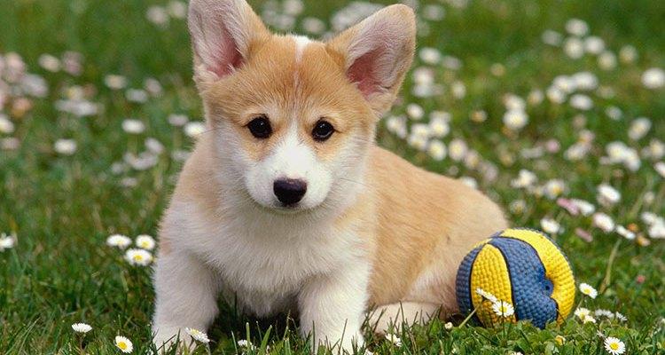 Какво не знаем за домашния любимец – кучето?