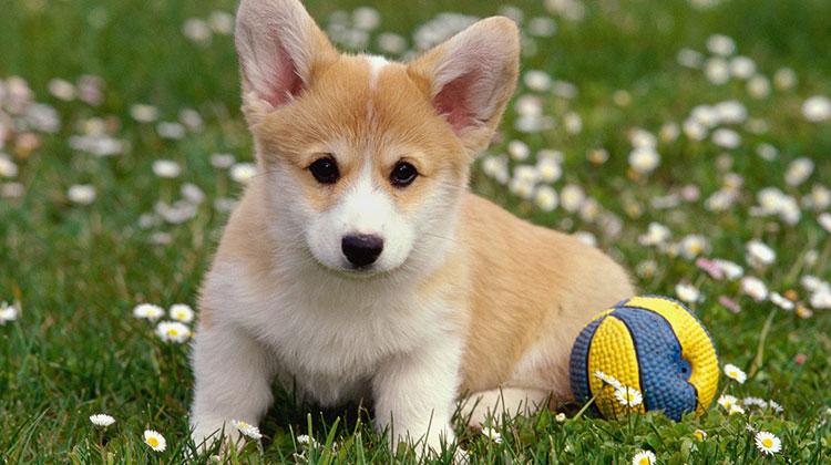 Какво не знаем за домашния любимец - кучето?