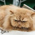 Какво не знаем за котката – домашният ни любимец