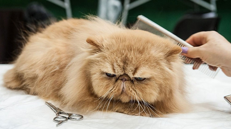 Какво не знаем за котката - домашният ни любимец