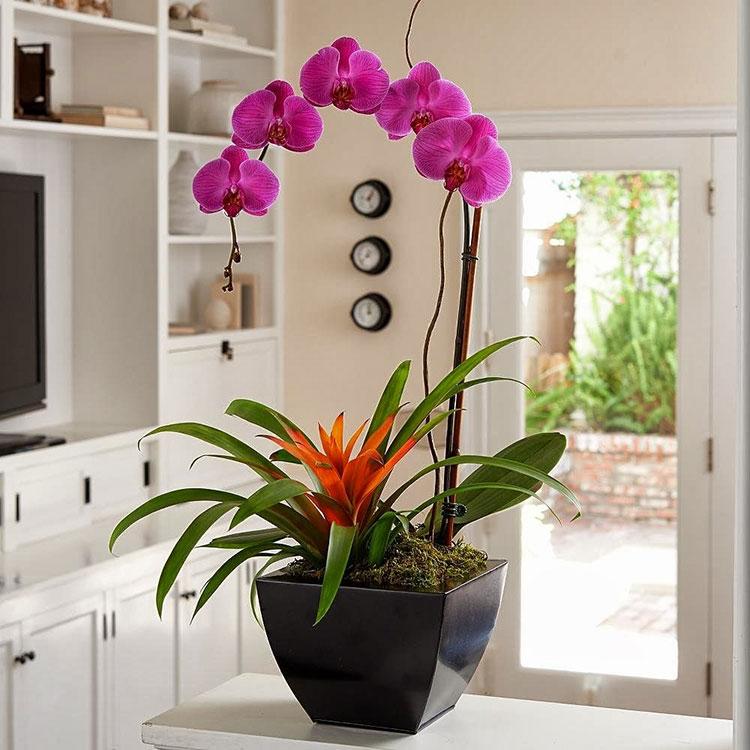 Отглеждане на орхидеи у дома 1