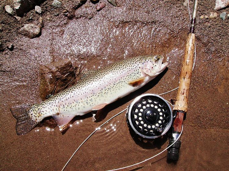 Съвети за рибари - какви такъми да изберем за риболова? 4