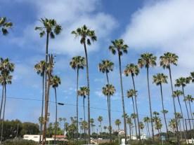 Palms at the Meditation Gardens