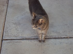 This cat followed me around for a few minutes