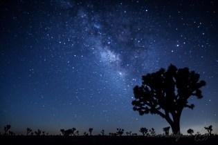 The Milky Way over Joshua Tree