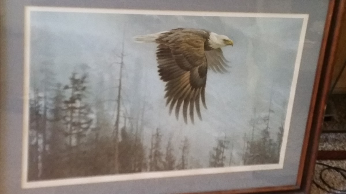 Rare 1978 Robert Bateman Majesty On The Wing Bald Eagle