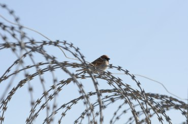The Afghan LBB (Little Brown Bird) at 200mm