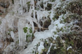 Icicles along the wadi