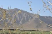 mountains through the wild flowers