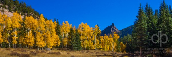 Aspens in the Crags landscape panorama by Dan Bourque